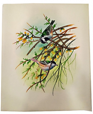 Hand Painting of Bird – 30cm X 25cm