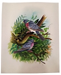 Bird Painting on Silk